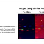 High background when fluorescent western blot stained with ponceau